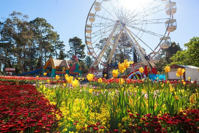 floriade 2019 tulip festival canberra canbhol holiday short term accommodation hotel serviced apartment