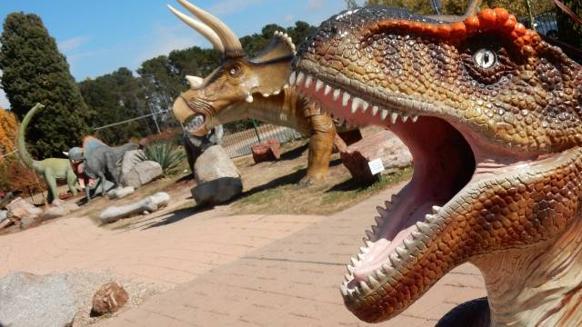 dinosaur museum canbhol canberra family holiday budget friendly