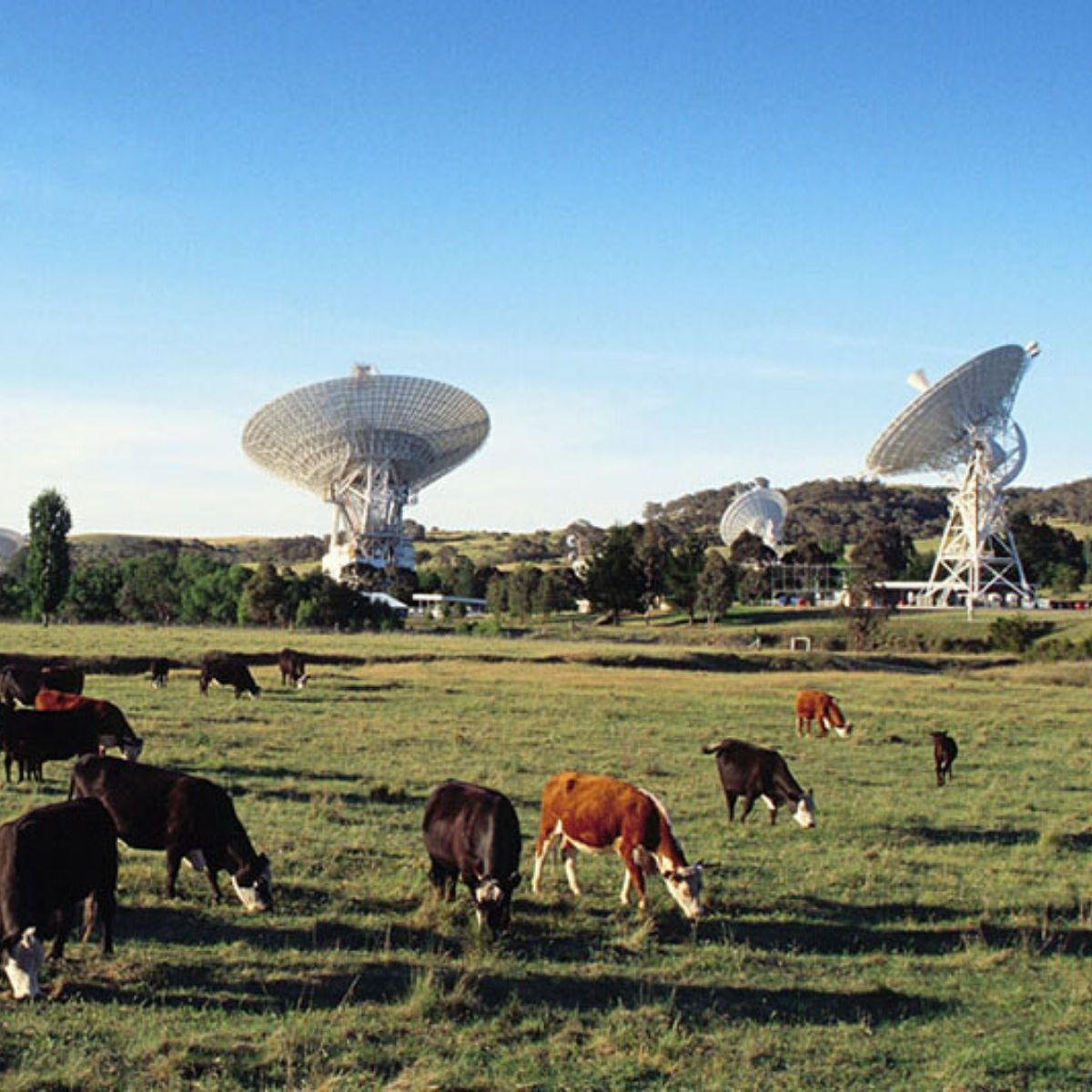 canberra deep space communications complex science space cows earth station tidbinbilla ACT apollo lunar module short term holiday accommodation