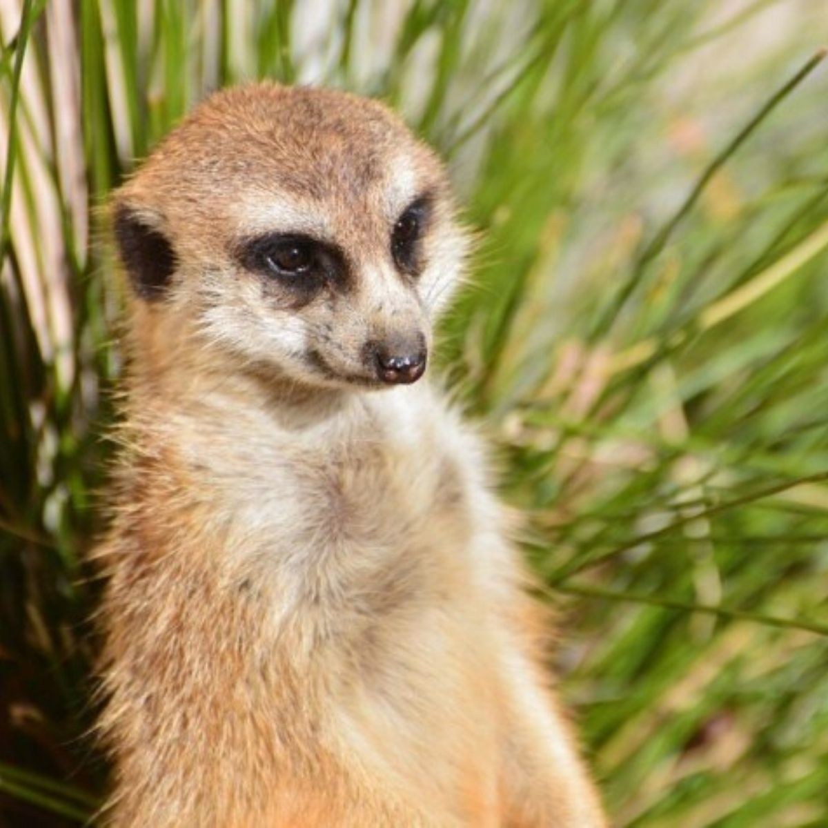 national zoo aquarium meerkat animal canberra capital city australia creatures wildlife short term holiday accommodation budget hotel motel family friendly