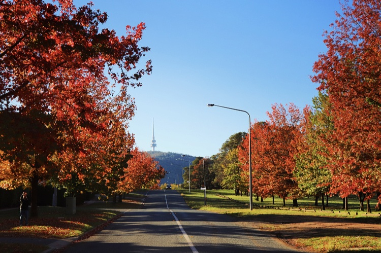 canberra autumn leaves trees short term holiday accommodation budget hotel canbhol